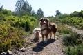 Gasthunde im La Clape April 2017 - 1