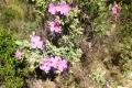 Wildblumen Anfang April 2017 - 1