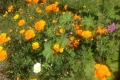Wildblumen Anfang April 2017 - 2jpg